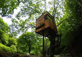 TK Treehouse 2